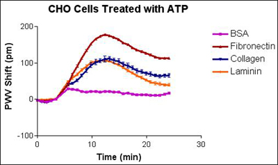 Temporal response of CHO cell stimulation with saturating amounts of ATP dosing.