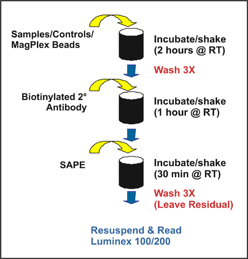 MILLIPLEX™ MAP Assay Protocol using ELx405 Magnetic Bead Washer Protocol (see Table 1).