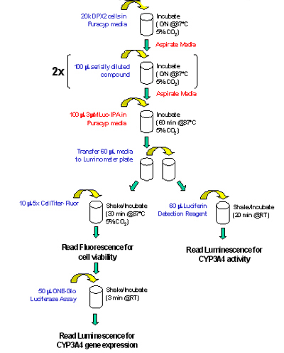 Triplex Assay Workflow.