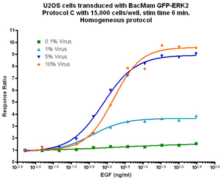 U2OS cells transduced with BacMam ERK2 virus at four different concentrations.