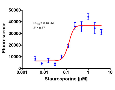 Dose responsive change in nuclear condensation caused by staurosporine.