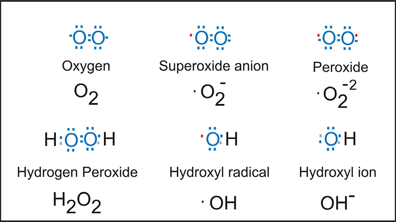 An Introduction To Reactive Oxygen Species