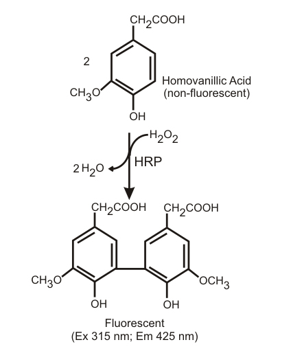 Dimerization of homovanillic acid by the action of HRP and hydrogen peroxide.