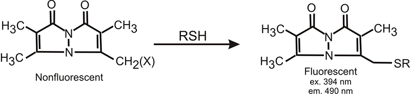 Bimane structure and reaction with thiols.