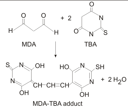 MDA-TBA adduct formation.