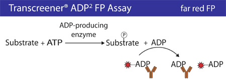 The Transcreener® ADP Detection Mixture comprises an ADP Alexa633 Tracer bound to an ADP2 Antibody.