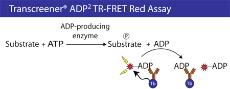 The Transcreener® ADP Detection Mixture comprises an ADP HiLyte647 Tracer bound to an ADP2 Antibody-Tb conjugate.
