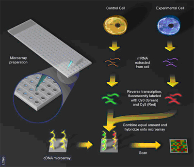 Use of Tissue Microarray to Facilitate Oncology Research - Springer
