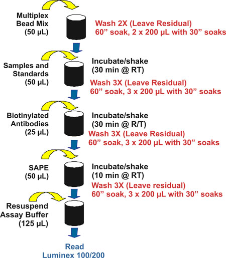 Cytokine assay workflow