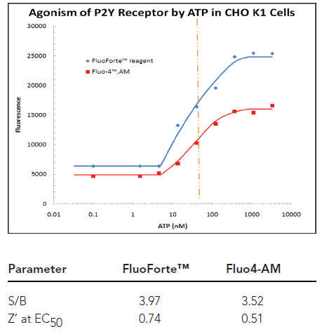 FluoForte® and Fluo-4 dye ATP dose response curves in CHO-K1 cells, expressing P2Y endogenous receptors with curve statistics.