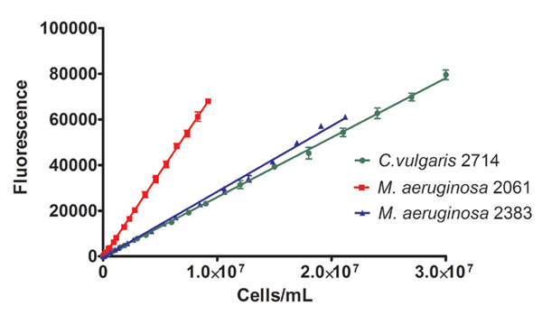 Calibration curves for algal strains grown in BG11 media based on fluorescence excitation of chlorophyll.