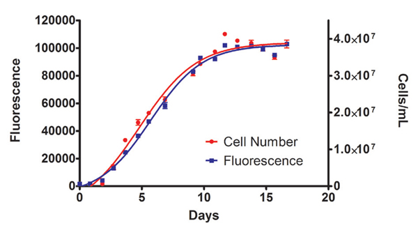 Cell density (from absorbance measurements) and Fluorescence of Chlorella vulgaris culture in BG11 media.