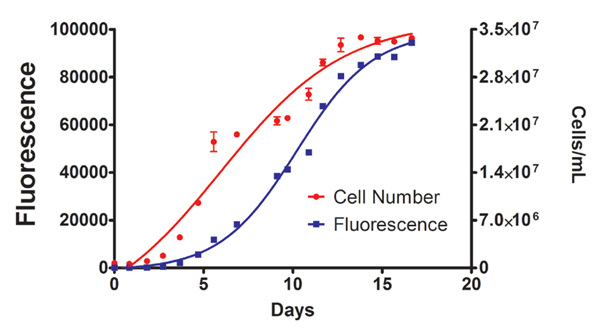 Figure 9. Cell density (from absorbance measurements) and Fluorescence of Microcystis aeruginosa 2383 culture in BG11 Media.
