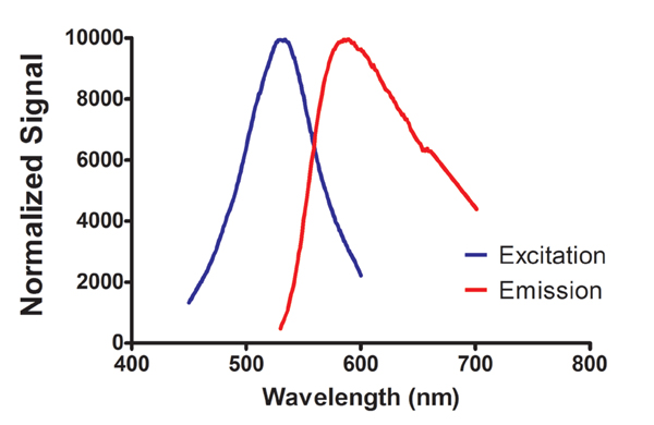 Fluorescent excitation and emission spectrum ofC. vulgaris stained with Nile red dye.