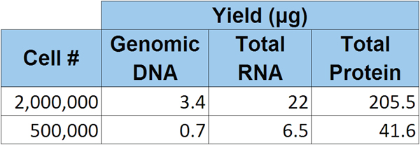 Calculated yields from native absorbance measurements of purified genomic DNA, total RNA and total protein from the indicated number of HT1080 cells.