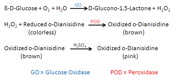 Enzymatic method for quantitative determination of glucose concentrations. Glucose oxidase and peroxidase enzymes are for the sequential oxidation of glucose and oxidation of o-Dianisidine to a stable, colored product capable of detection by microplate or cuvette based absorbance spectroscopy.