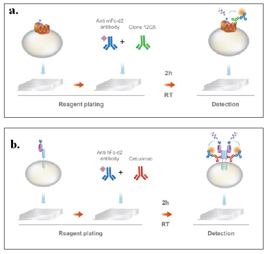 Target receptor indirect binding measurement.