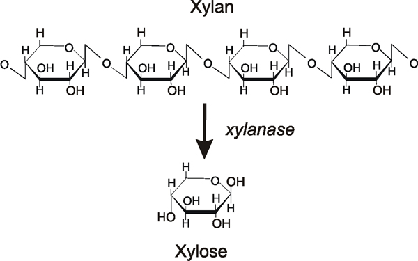Structure of Xylan and its digestion to xylose.
