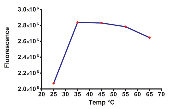 Fluorescence produced by 300mU/mL of amylase enzyme isolated from B. subtilis. The fluorescence was plotted after 30 minute incubation from assays run at different temperatures. Data represent the mean of 4 determinations.