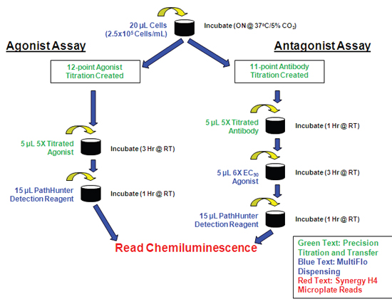 Automated PathHunter RTK Assay Procedure.