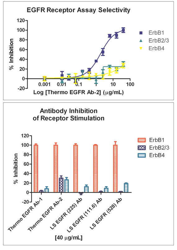 Antibody Selectivity Results. A. Inhibition by Thermo EGFR Ab-2 of EGF:ErbB1, Heregulin-β1:ErbB2, and Neuregulin-1 β2:ErbB4 binding. B. Antibody inhibition of ligand binding for each ligand:receptor combination. Percent inhibition shown is caused by the uppermost concentration of antibody tested.