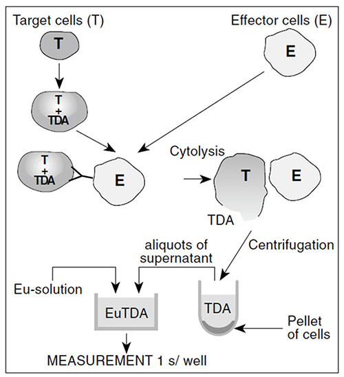 DELFIA assay principle, showing loaded target cells binding to antibody that is also bound to effector cells, target cell lysis, pelleting, and TDA binding with europium to form a fluorescent chelate.