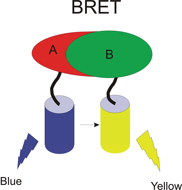 Schematic depicting the BRET system.