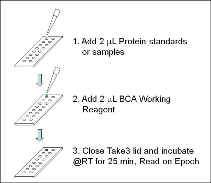 In-situ work flow for micro-volume BCA analysis using a 1:1 BCA working reagent to sample