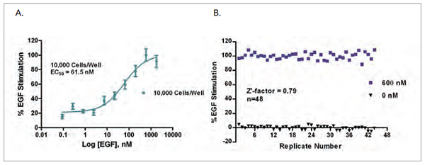 (A) EGF stimulation of STAT3(Tyr705) phosphorylation demonstrated as a full dose response; (B) Z'-factor score from 40 replicate measurements each at [EGF] of 600 nM and vehicle.