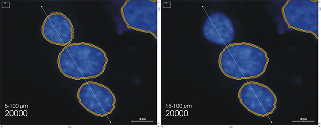 . Use of the scale bar to assess object size minima and maxima from imaged cellular objects.
