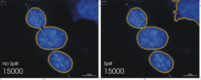 Analysis of Nuclear Stained Cells - Using the Cytation™3 Cell