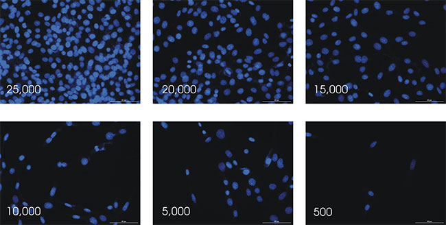 Cell Titration of DAPI stained cells Imaged at 20x.