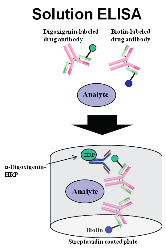 Assay schematic for solution ELISA used in the detection of host antibodies against biotechnology products