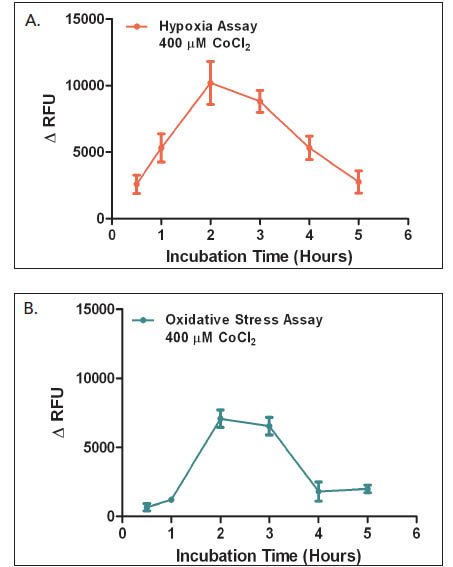 Evaluation of incubation time effect using 400 μM CoCl2 for (A) Hypoxia and (B) Oxidative Stress assays.