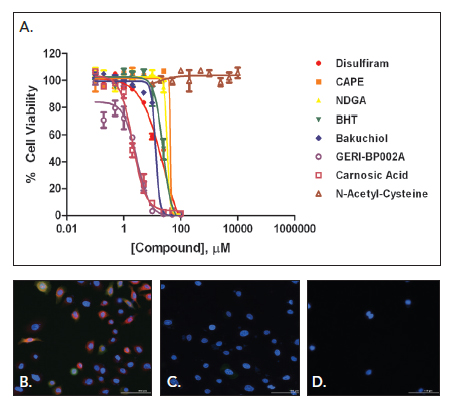 (A) % cell viability values for selected inhibitory compounds. 20x images also shown for (B) well containing 500 μM CoCl2 plus no inhibitor; (C) inhibition via NAC of CoCl2 induced hypoxia with no effect on cell viability; and (D) disulfiram inhibition due to significant loss of cell viability.