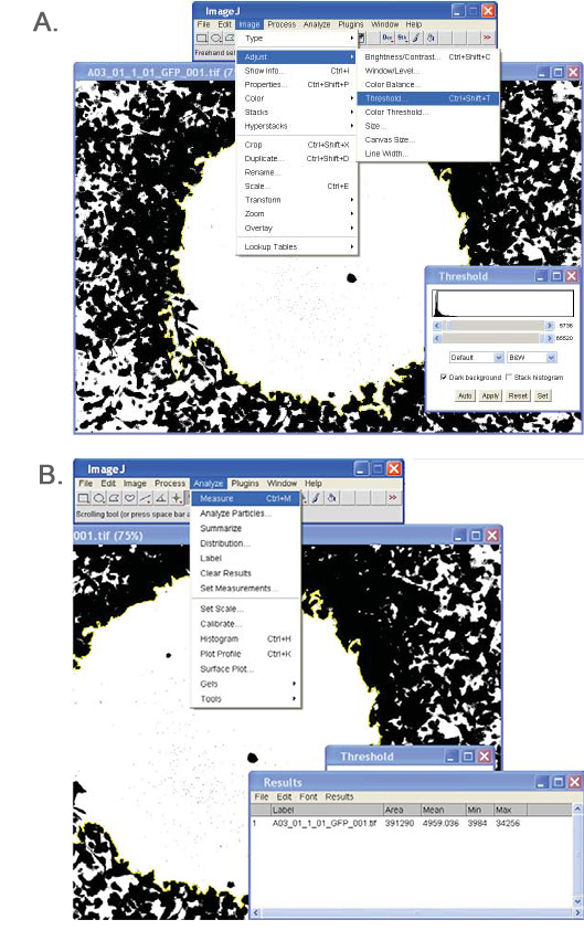 ImageJ Analysis.