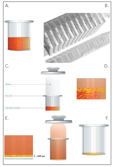 Creation of 3-Dimensional Cell/Collagen Hydrogel using RAFT™™ System