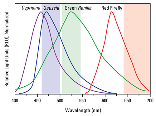 Gaussia-Firefly Dual Luciferase Assay emission spectra profile.
