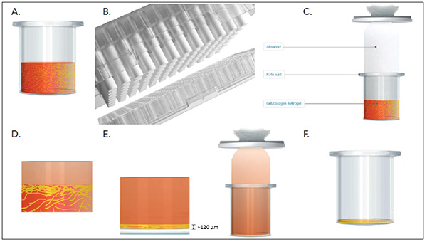 RAFT 3D Cell Culture System Principle
