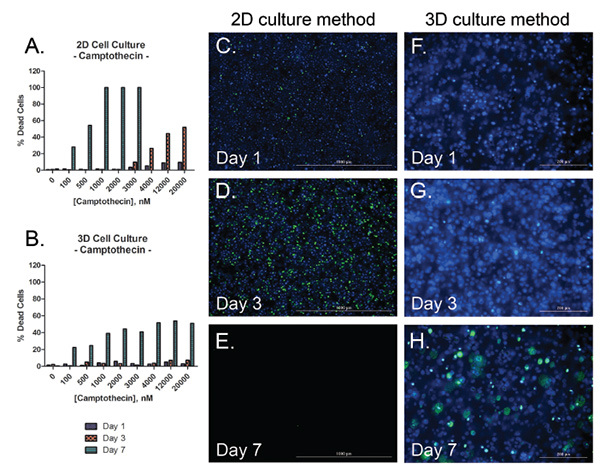 Long-term oxidative stress and apoptosis analysis of 2D and 3D cultured hepatocytes treated with camptothecin.