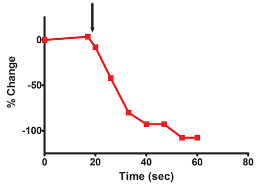 Quantitation of Red Downward PIP2 Sensor Response