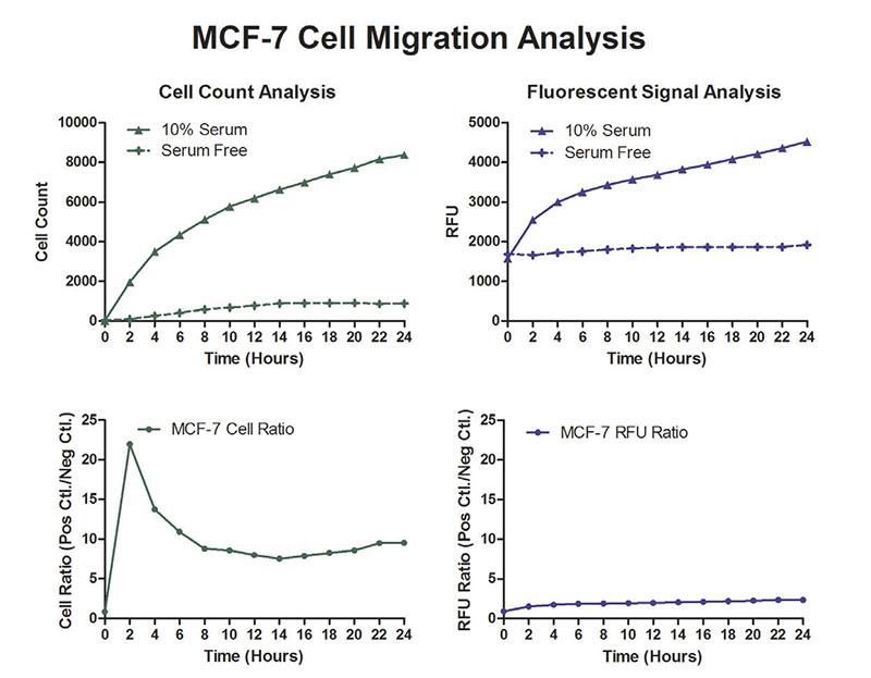 Image- and Cell-Based Migration Analysis.