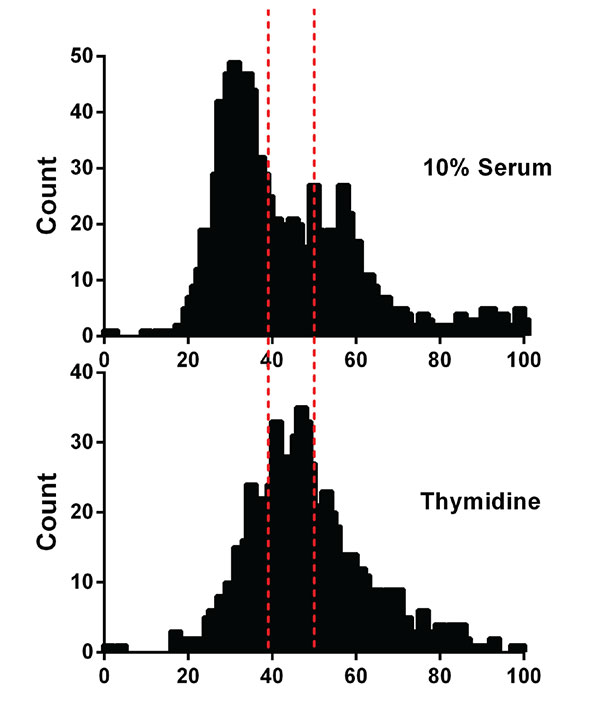 Nuclear content of thymidine and untreated HeLa cells.
