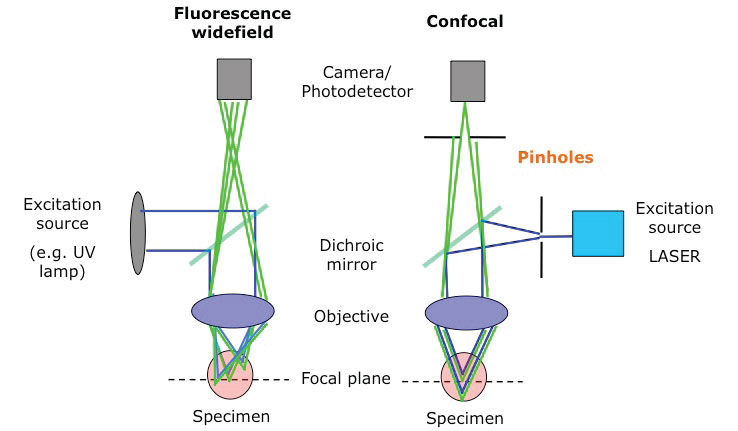 Comparison of wide field with confocal fluorescence