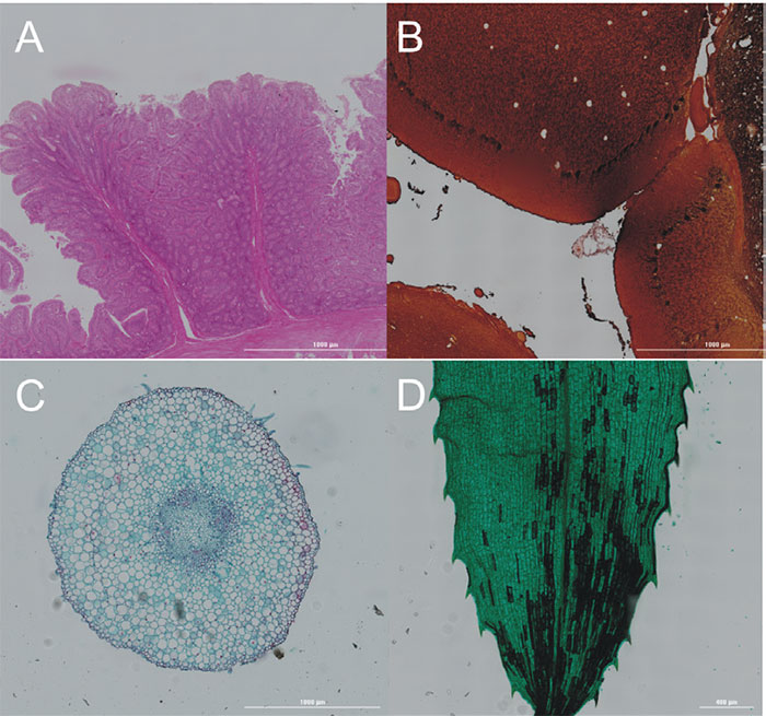 Series of color brightfield images from different tissues.