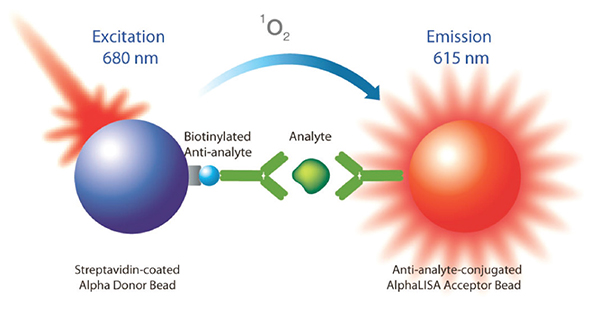 Assay schematic for AlphaLISA homogeneous proximity assay principle for the detection of analyte in biotherapeutic products. Upon excitation, the AlphaLISA donor bead generates singlet oxygen molecules.