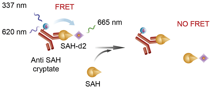 Assay schematic for the EPIgeneous Methyltransferase Assay Kit