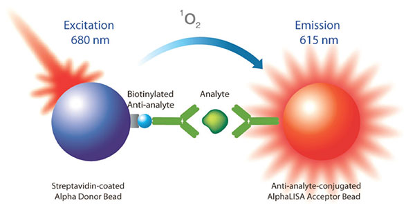 Assay schematic for AlphaLISA homogeneous proximity assay principle for the detection of analyte in biotherapeutic products.