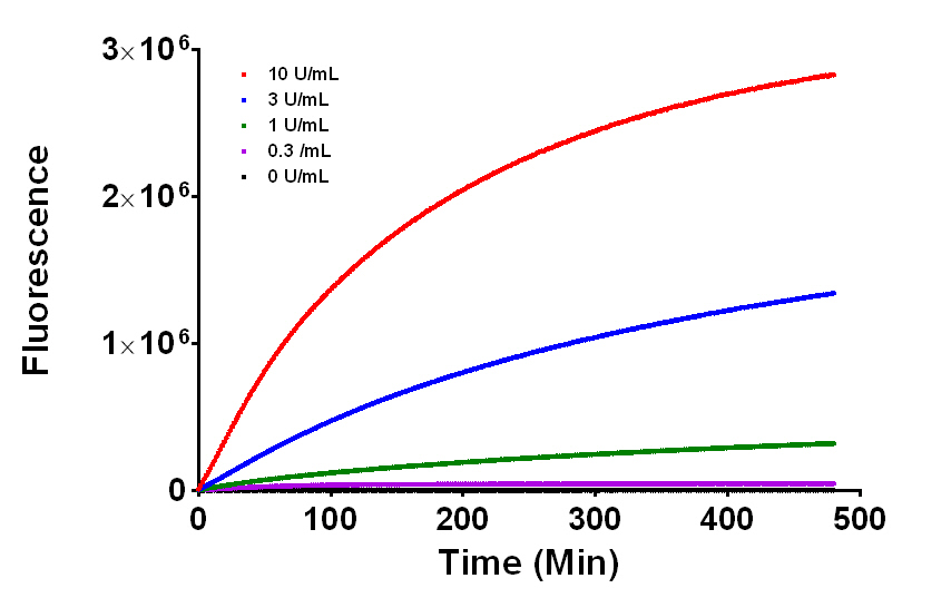 Kinetic measurement of fluorescence generated by β-galactosidase enzyme at various concentrations.