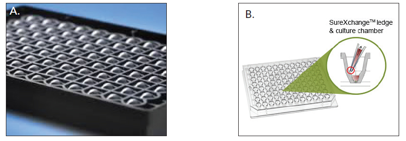 ULA spheroid microplates possessing (A) round (Image courtesy of Corning, Inc.) and (B) tapered well bottom configurations (Image courtesy of InSphero).